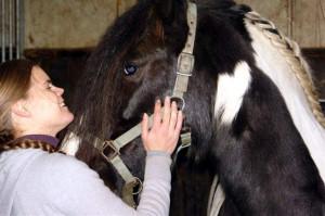 Knuffel voor een paard